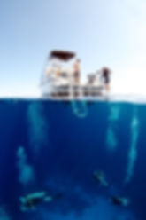 Group Package Deals Grand Cayman