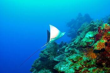 North Wall Diving Grand Cayman