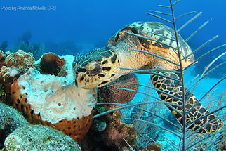 Dive Package Deals Grand Cayman