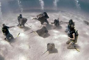 Stingray City Dive Grand Cayman