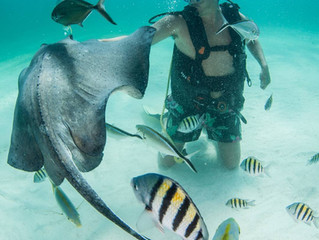 Stingray City - probably the best shallow dive in the world!