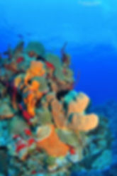 Red Sail Sports Dive Group Packages Grand Cayman