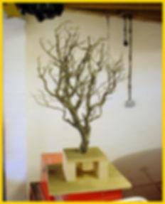 alex_tree_base.jpg