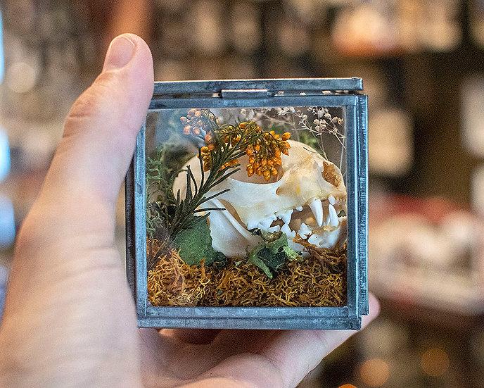 Cat Skull in Glass Box