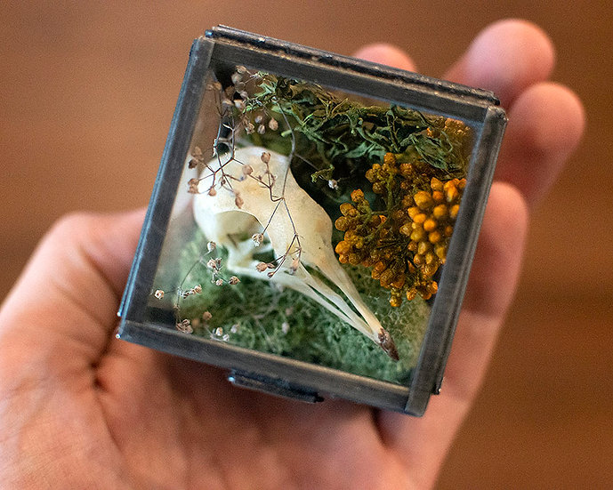 Mink or Pigeon Skull in Glass Box