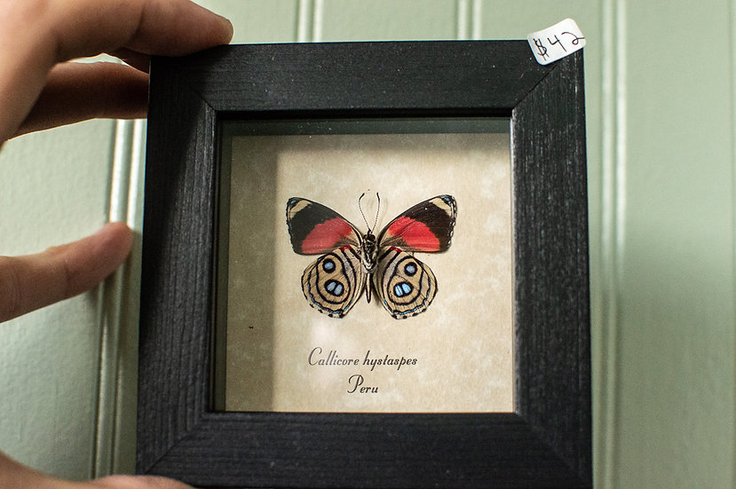 Red Verso Butterfly