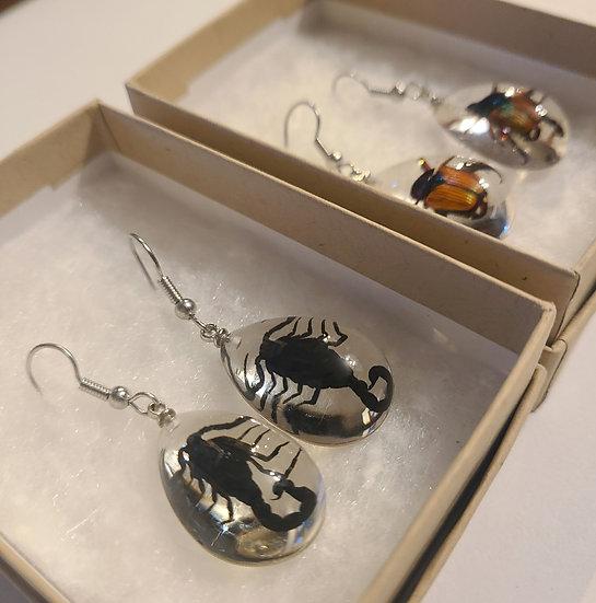 Specimen Earrings