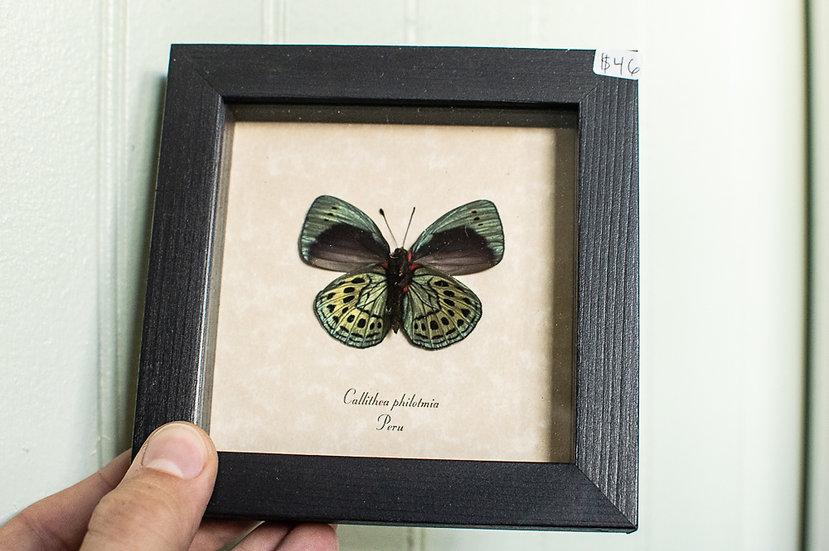 Metallic Jewels Butterfly