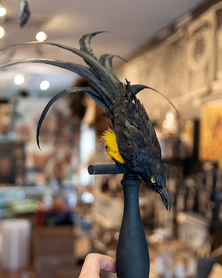 Fantasy Bird Taxidermy