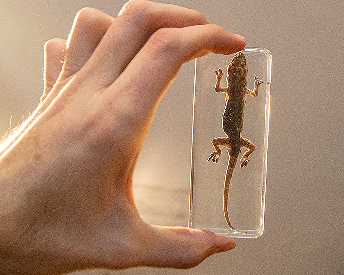Lizard Resin Specimen