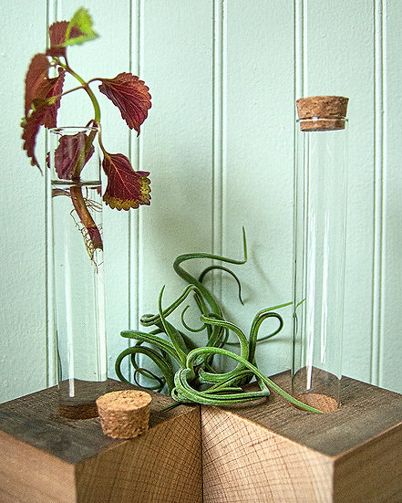 Propagation Tube With Holder