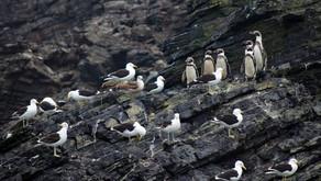 Projeto de mineração ameaça arquipélago de Humboldt, tesouro natural do Chile