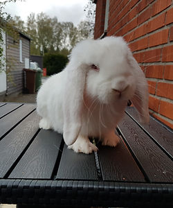 Rufus (5).jpg