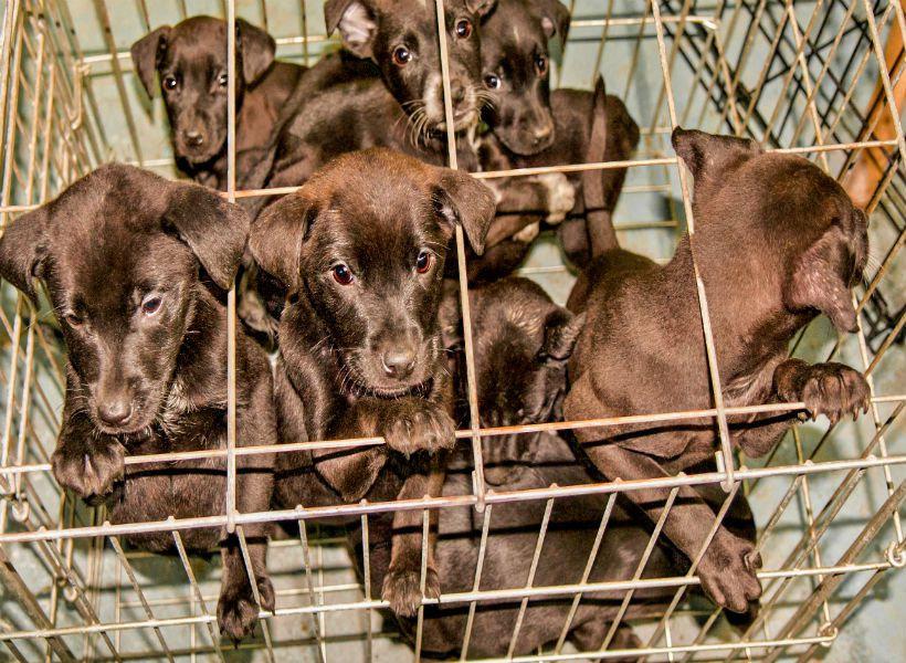 puppy farmers.jpg