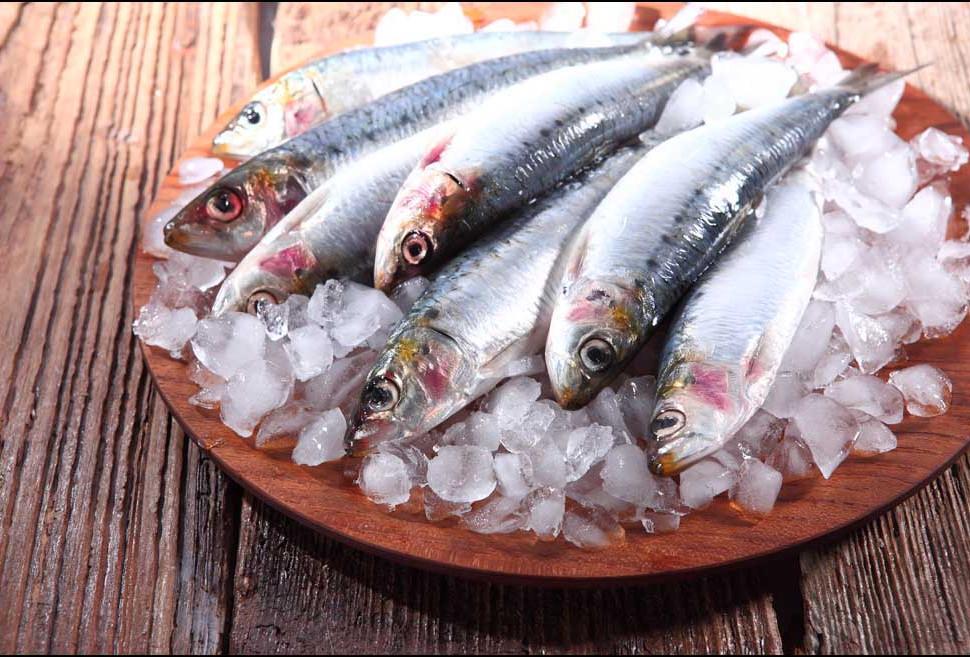 sardinen.jpg