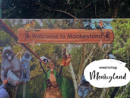 Monkey Business @Monkeyland
