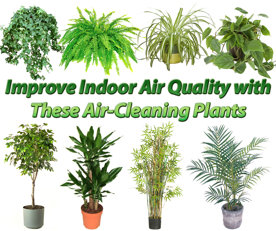Houseplants that filter toxins out of