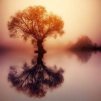 tree-3156441_960_720.jpg
