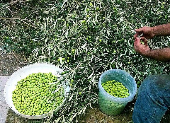Olive Siciliane / Masline Siciliane / Sicilian Olives