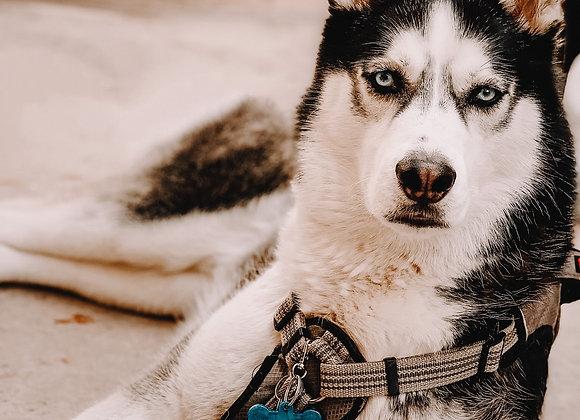 Lobo - Dog Tags
