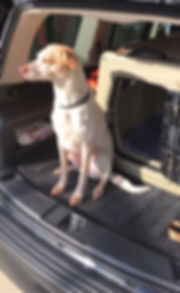 Chester_Bed_Bug_Dog_Green Bay_Car_edited