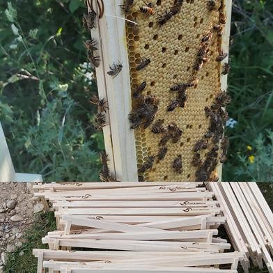 langstroth super bee frames