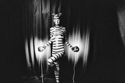 extraterrestrial zebra