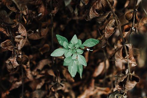 growth 2.jpg