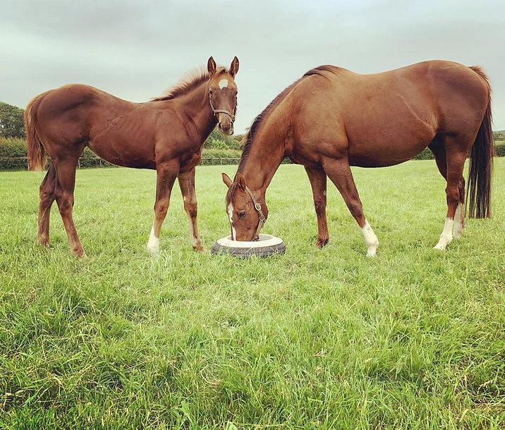 Aislabie Mare & Foal.jpeg
