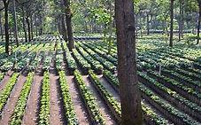 10 - COFFEE PLANTATION.jpg