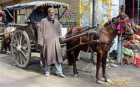 AGRA - HORSE CARRIAGE.jpg