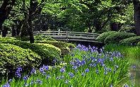 KANAZAWA - KENROKU-EN GARDEN.jpg