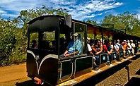 ECOLOGICAL JUNGLE TRAIN.jpg