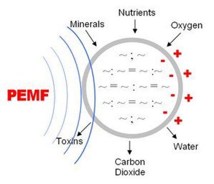 pemf-membrane-300x259.jpg