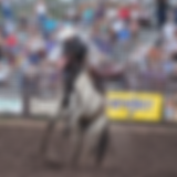Payson-Rodeo-saddlebronc.png