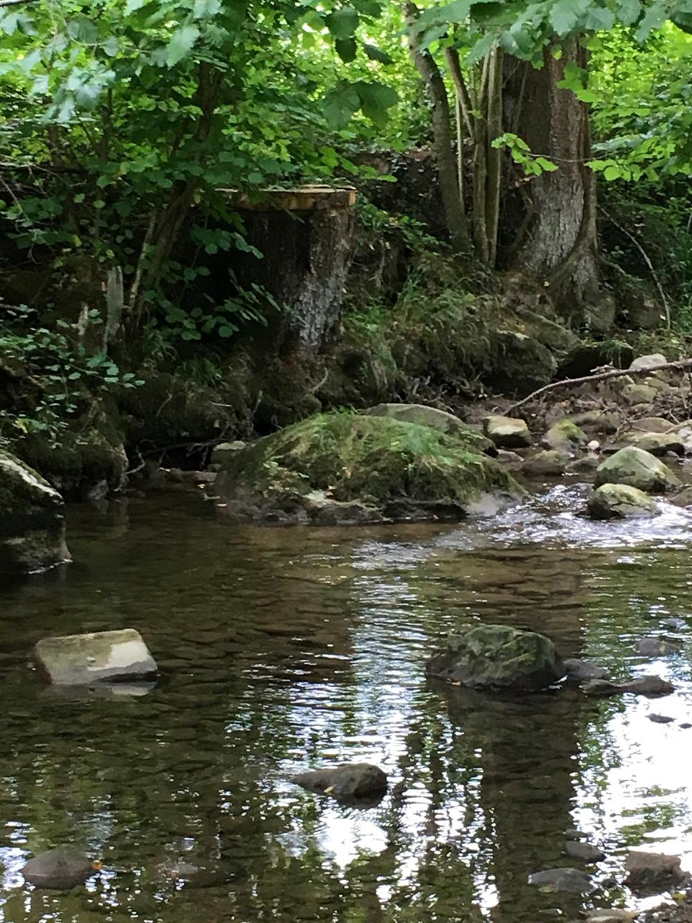 Baumstümpfe säumen das gegenüberliegende Ufer