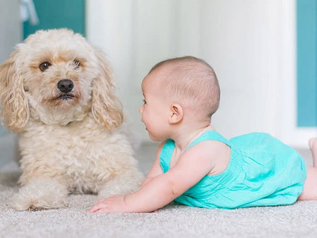 Best Types of Carpet for Homes with Children in Payson, Arizona.