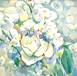 351 weisse Rosen