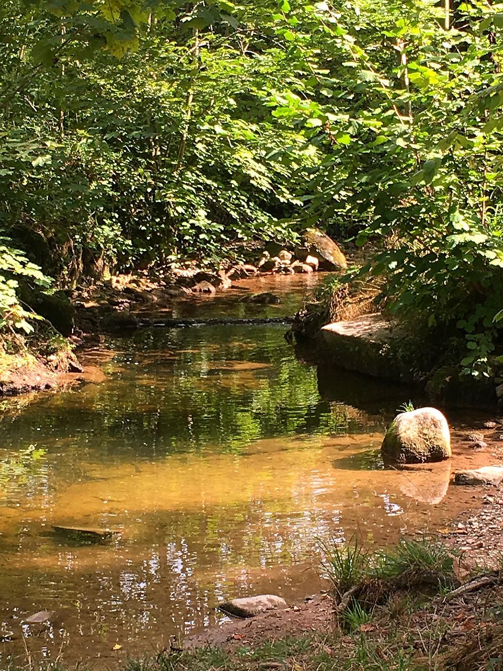 grünen Ufer - grünes Wasser