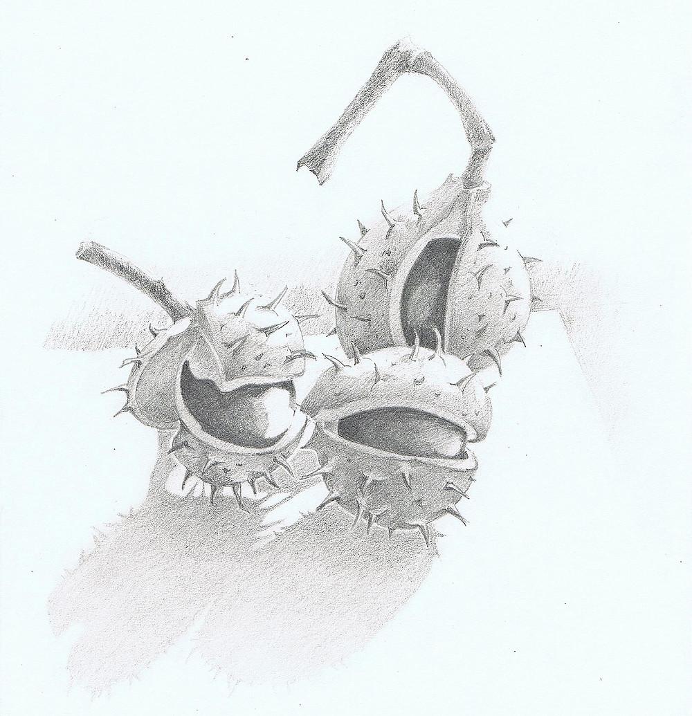 3 Kastanien in ihrer Schale