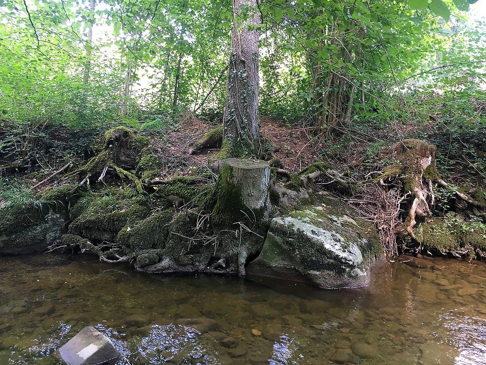 dunkle Uferansicht mit totem Holz