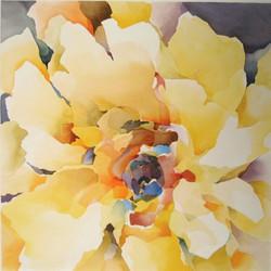 834 Sonnenblume