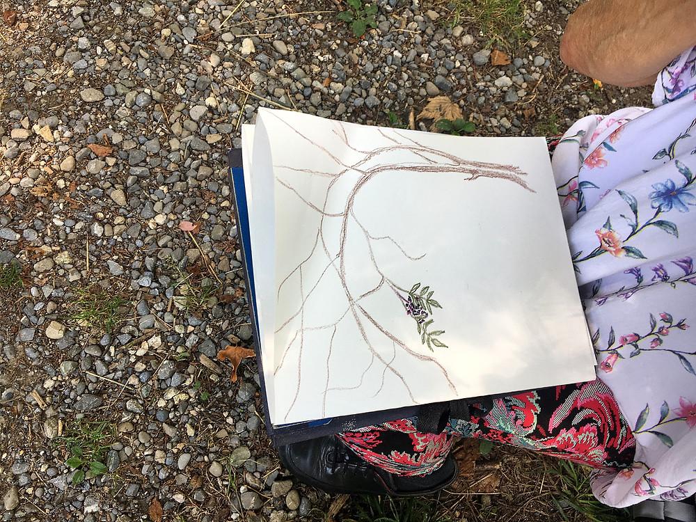 Zeichnung von jungen Bäumen deren Äste sich über den Weg ranken und auf dem Papier den äusseren Rahmen sprengen.     eg
