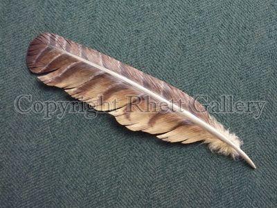 Hawk Feather