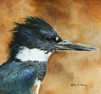 Kingfisher Head