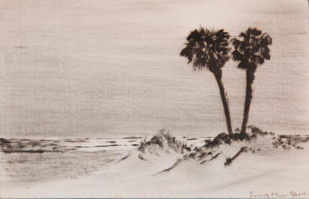 Beach Palmettos