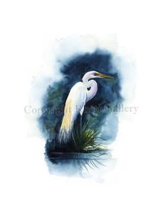 Marsh Egret