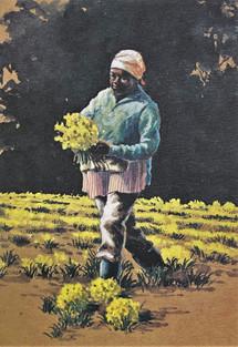 Daffodil Picker (Aqua)