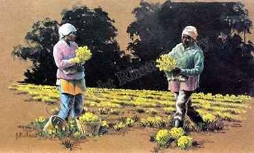 Daffodil Pickers