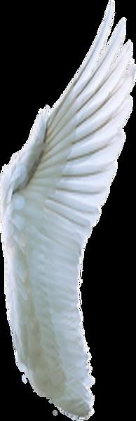 fluegel-weiss-susi.png